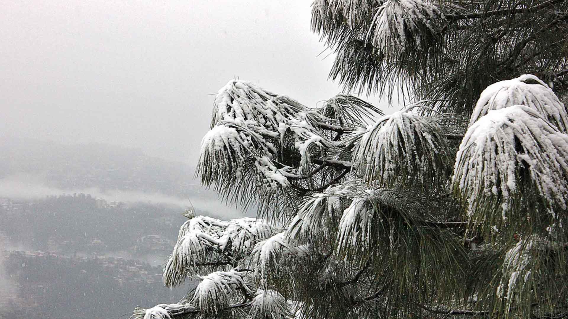 Snow Fall In shimla